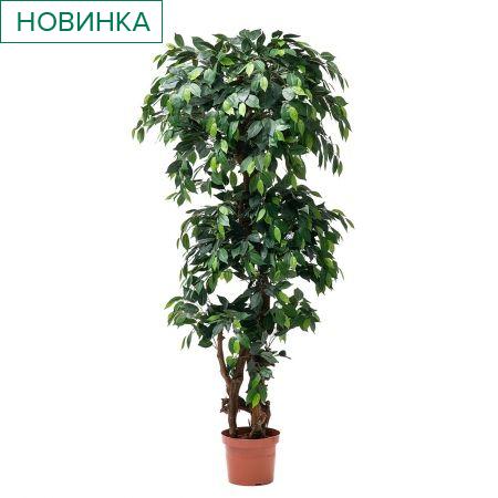 180/Я3/ОС/34-2(з) Фикус h-180см (латекс)