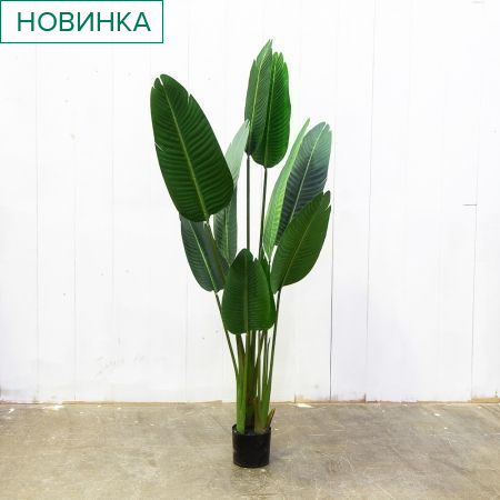 160/К/360 Банановая Пальма h-160см
