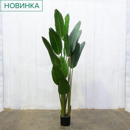 180/К/360 Банановая Пальма h-180см