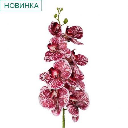 401/0347-11 Орхидея латекс с прожилками h97см бордовая (9г;4б)