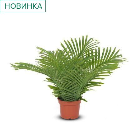 П45/К/49Л(з.) Пальма кустовая (латекс) h-45см