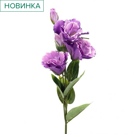 7141/10523-17 Эустома *5г h72см (фиолетовая)(Ф)