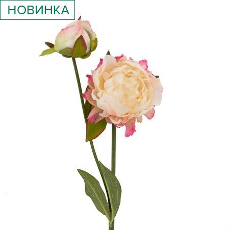 401/0234-20В Пион ветка h56см (бело-розовый)(1гол+1бутон)