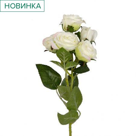 401/0159-23В Роза кустовая *5 h60см (белая)
