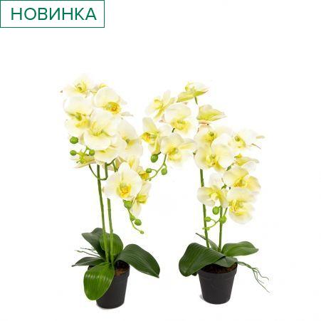 ЦИ60*2/33-1(з.)(Promo) Орхидея h60см(латекс) в техническом горшке d11см
