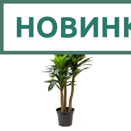 180/3С/405(х)(Promo) Драцена h180см (латекс)