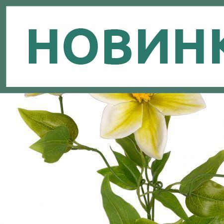 401/0014-19L Клематис ветка искусственная h64см (бело-зеленая) (2г. 1б.)