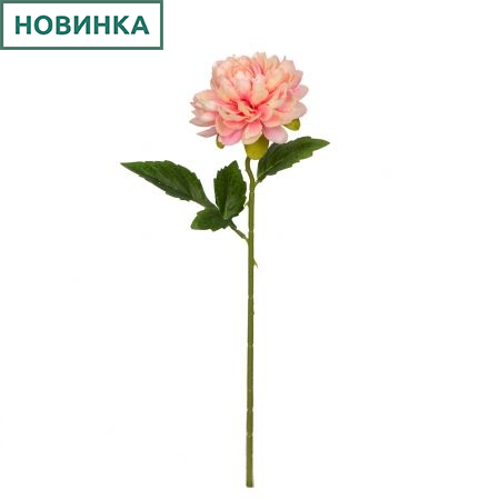 7141/9149-9/1 Георгин *1г d12; h50см (розовый)