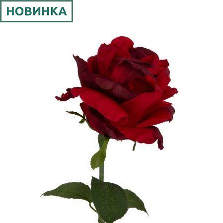 401/5402/2К Роза одиночная h78см (красный)
