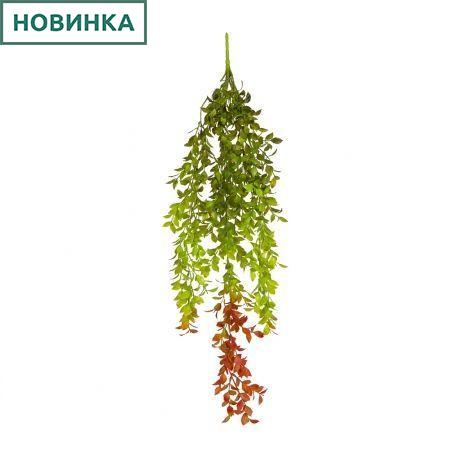 7143/0016-43 Даксин ампельный (зелено-бордовый) h80см