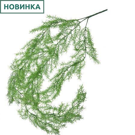 7143/0017-4 Аспарагус Шпренгера ампельный зеленый h95см