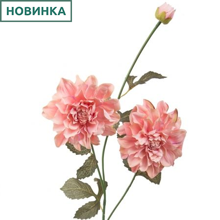 7141/А2790-03/1 Георгин розов. h115см(2г+1б)(480)