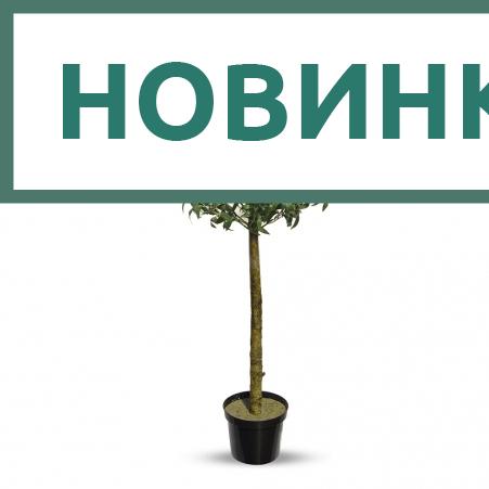 140/Ш/410(Promo) Оливковое дерево с плодами h140см