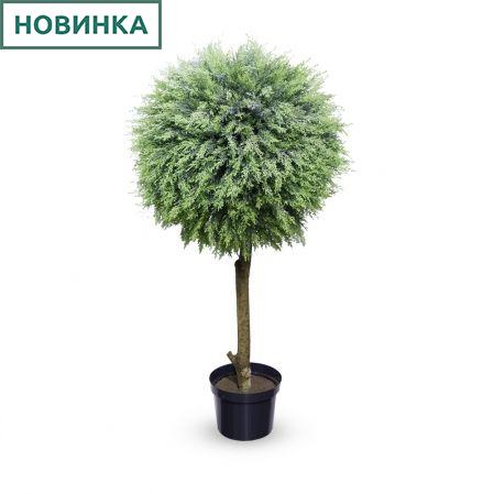 Туя-шар(з.) h120см, d65см