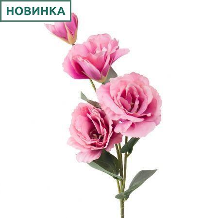 7141/А2790-07/1 Эустома розовая h72см(3г+1бут)(248)