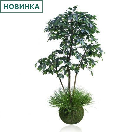 ККДД180/34(з.) Кокедама d40см Фикус зеленый h180см