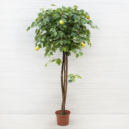 160/20М Лимон h160см(латекс)