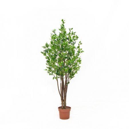 170/РН/198 Саламандровое дерево h170см (латекс)