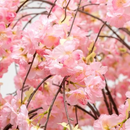180/2К/ОС/191-1 Сакура королевская (розовая) h180см