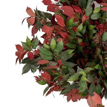 180/О/189(Уценка) Фикус зелено-бордовый 180см