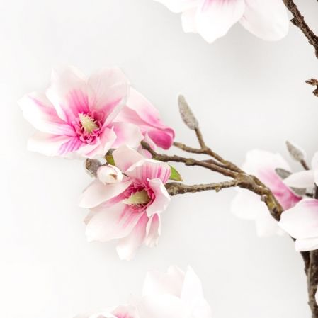 180/РН/193-1 Магнолия цветущая без листвы(розовая)h180см