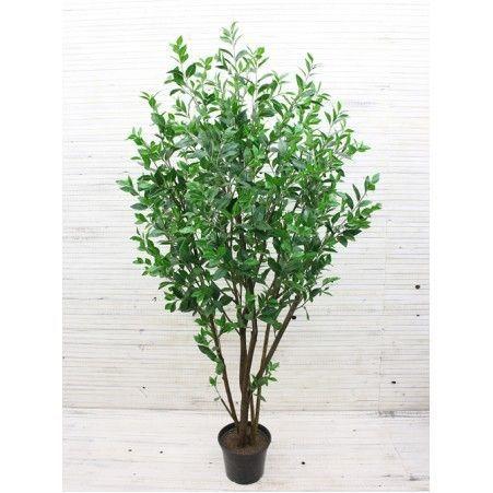 200/К/198 Саламандровое дерево 200см