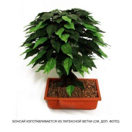 "БЛ 40/09МП Бонсай ""Фикус франц.зелен."" в пластиковом кашпо"