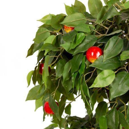 БП 100/2К/42 Бонсай плод. Яблоня-мини 100см