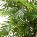 ПК200/11К/49 Пальма h200(латекс)