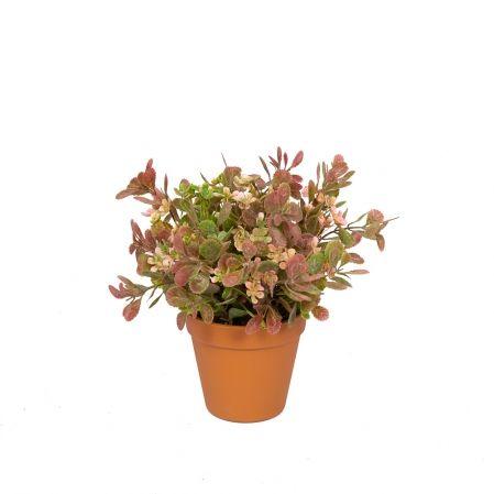ЦС25/201 Зелень цветущ. h25(розов.) в горшке d-11