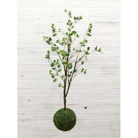 ККДД130/203 Кокедама d-27 Дерево с распуск. листоч
