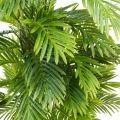 ПК160/9К/49 Пальма h160см(латекс)