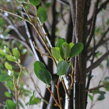 370/РН/200(з.) Дерево с распускающ.листочками370см