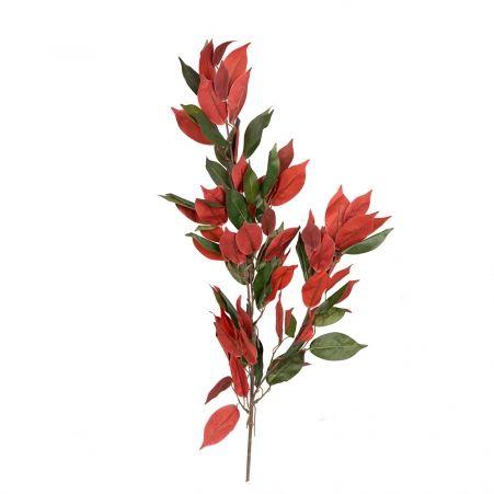 170/К/189(УЦЕНКА) Фикус зелено-бордовый 170см