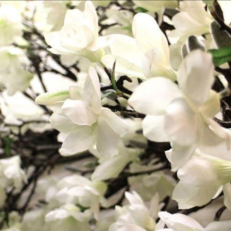 Л360/193-2(з.) Магнолия цветущая (белая) Лиана  L-3