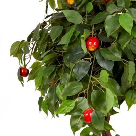 БП 100/ОС/44 Бонсай плодовый Яблоня 100см