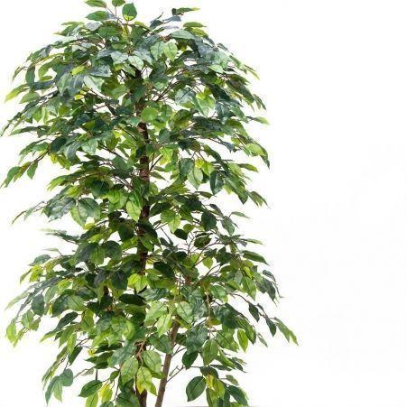 180/РУ/34 Фикус зелёный разноуровневый h180см(латекс)