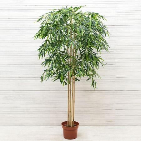 160/ШК/75(з) Бамбук *5 стволов (латекс премиум) h 160см
