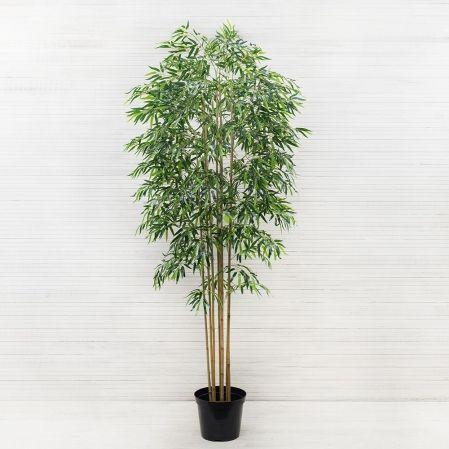 240/75/1(з) Бамбук*8 стволов h240см(латекс)