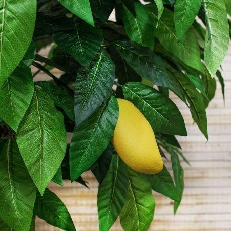 200/РН/301 Манго с плодами h-200см