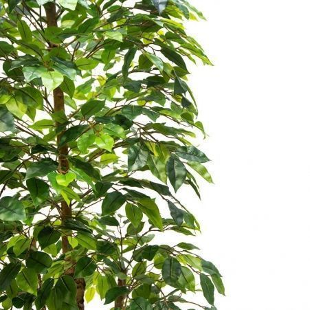 220/РУ/34(з.) Фикус зелён.разноуровнев.(латекс)220