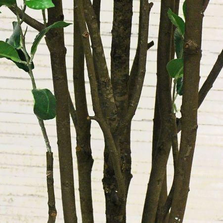 240/РН/198(з.) Саламандр. дерево