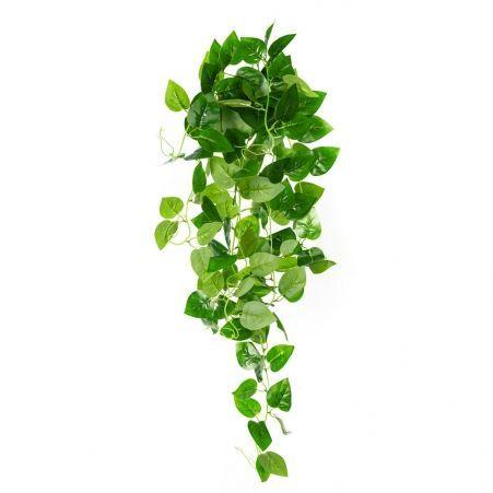 7144/0046-2/2Р Плющ сциндапсус зелёный (латекс)
