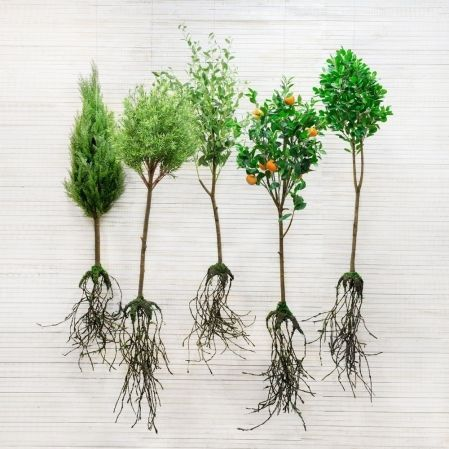 КД120/202(з) Дерево декор узк.лист с корнями