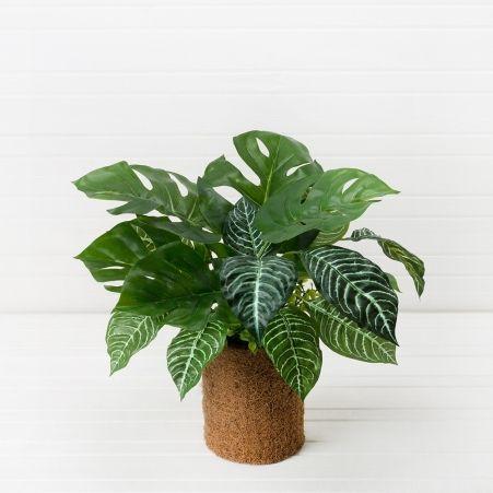 Зелень микс в кокосовом боксе d13см