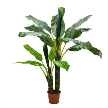 П170/2С/43 Банановая пальма h170см(латекс)