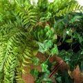 К277 Зелень микс в кокос. боксе (65*25*25)