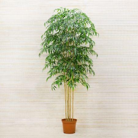 200/75/1-2(з.) Бамбук х5 стволов (латекс премиум) h-200см