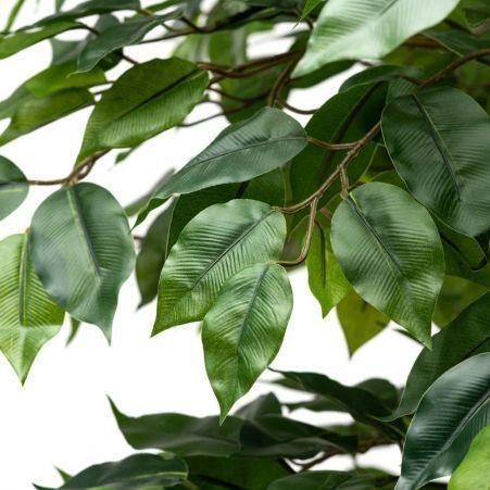 160/РУ/34-1(з.) Фикус разноуровневый зеленый (латекс) h160см