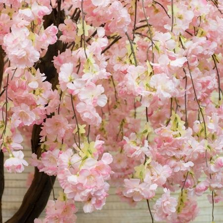 240/2К/ОС/191-1 Сакура королевская h240см(розовая)